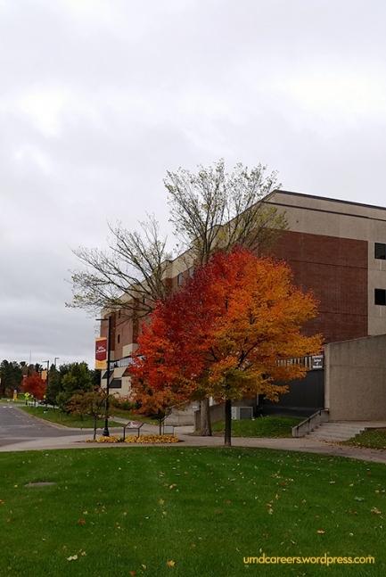 Fall at UMD