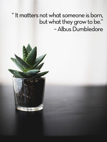 hp-growth-quote