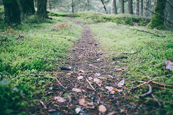 Path in Forest