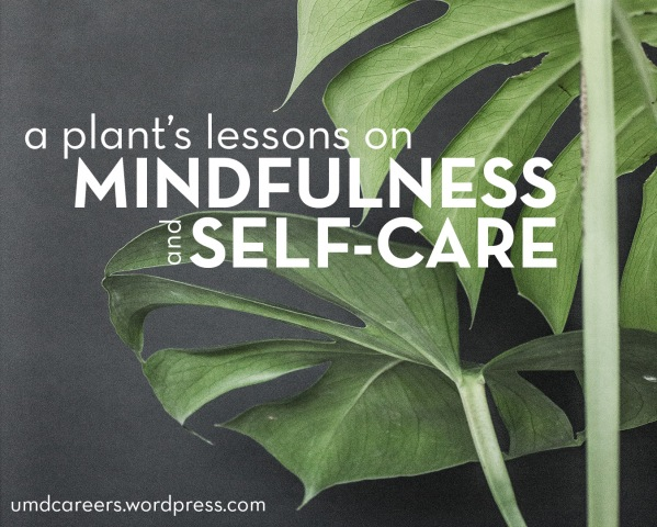 Monstera Plant on black background; A plant's lessons on mindfulness and self-care.